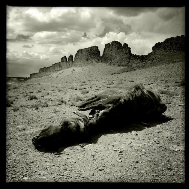 Dead Cow and Ridge, Navajo Reservation