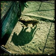The Tiger's Shadow
