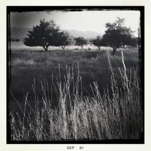 Deer in Apple Orchard, Mesa Verde in the Distance