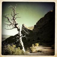 Dead Tree on Abandoned Knife Edge Road, Mesa Verde