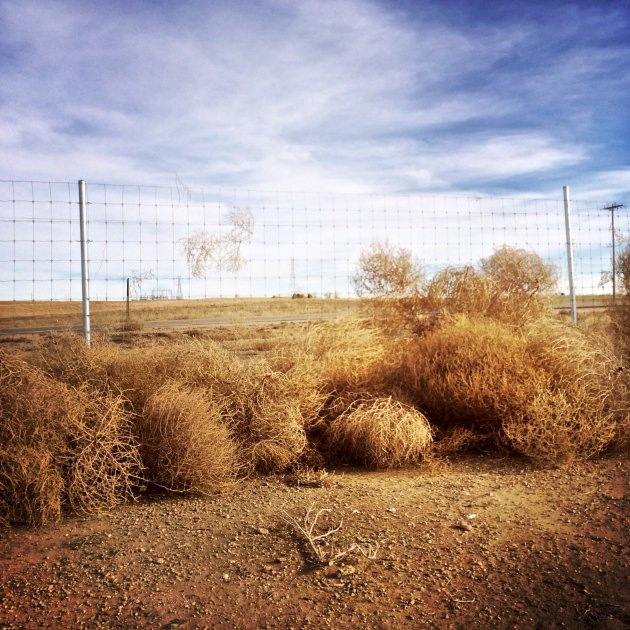 Tumbleweeds, Rocky Mountain Arsenal Wildlife Refuge