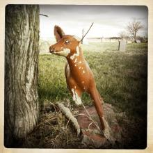 Broken Deer, White Hill Cemetery, Nebraska